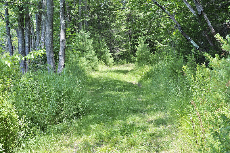 Summertime trail (Credit: Saco Bay Trails)