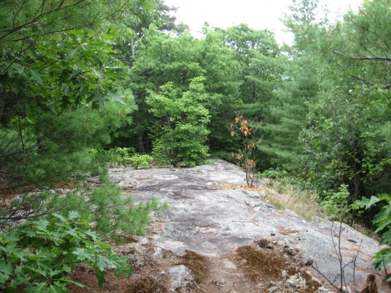 The Orange Trail (Credit: Landon Fake)