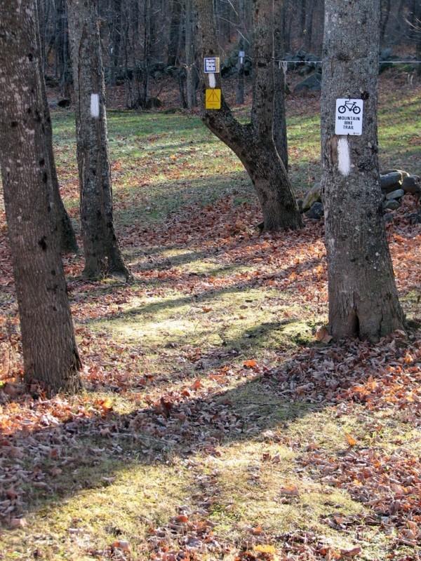 Singletrack trail (Credit: Joel Alex)