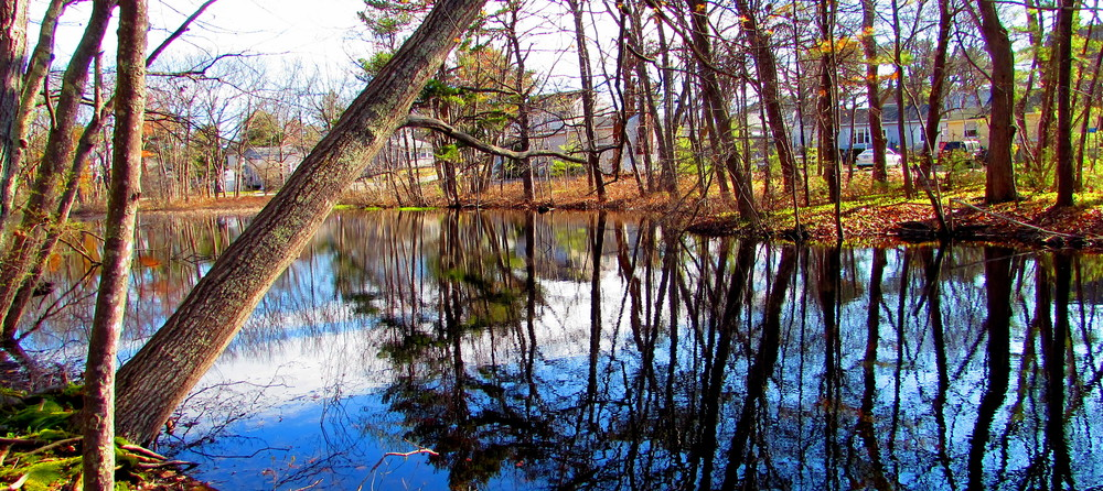 The still pond was reflecting a lot of light this morning (Credit: gary janson)