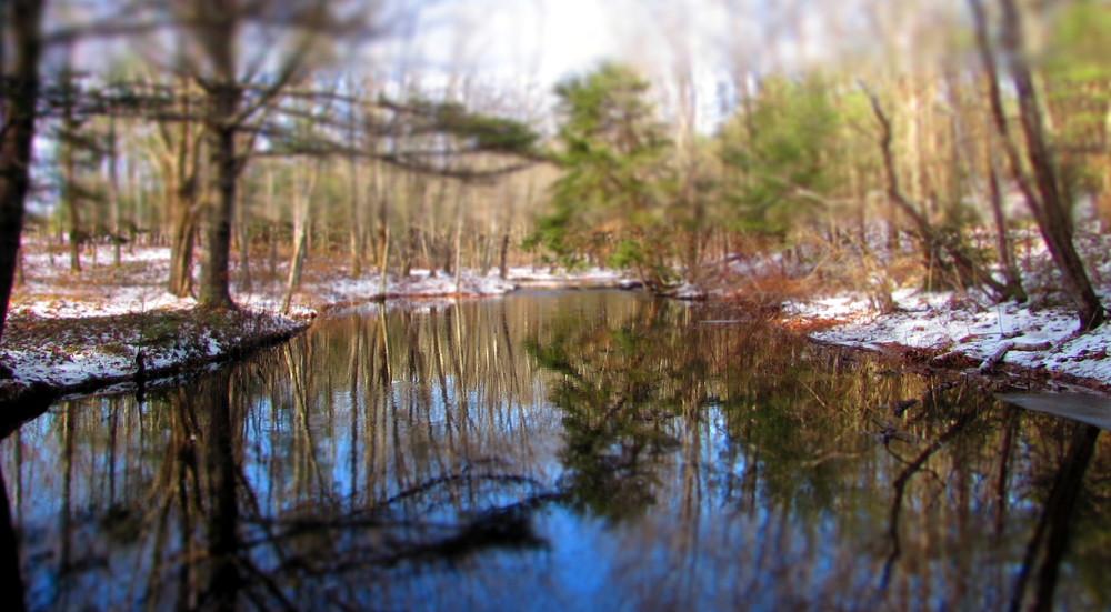 water reflections (Credit: gary janson)