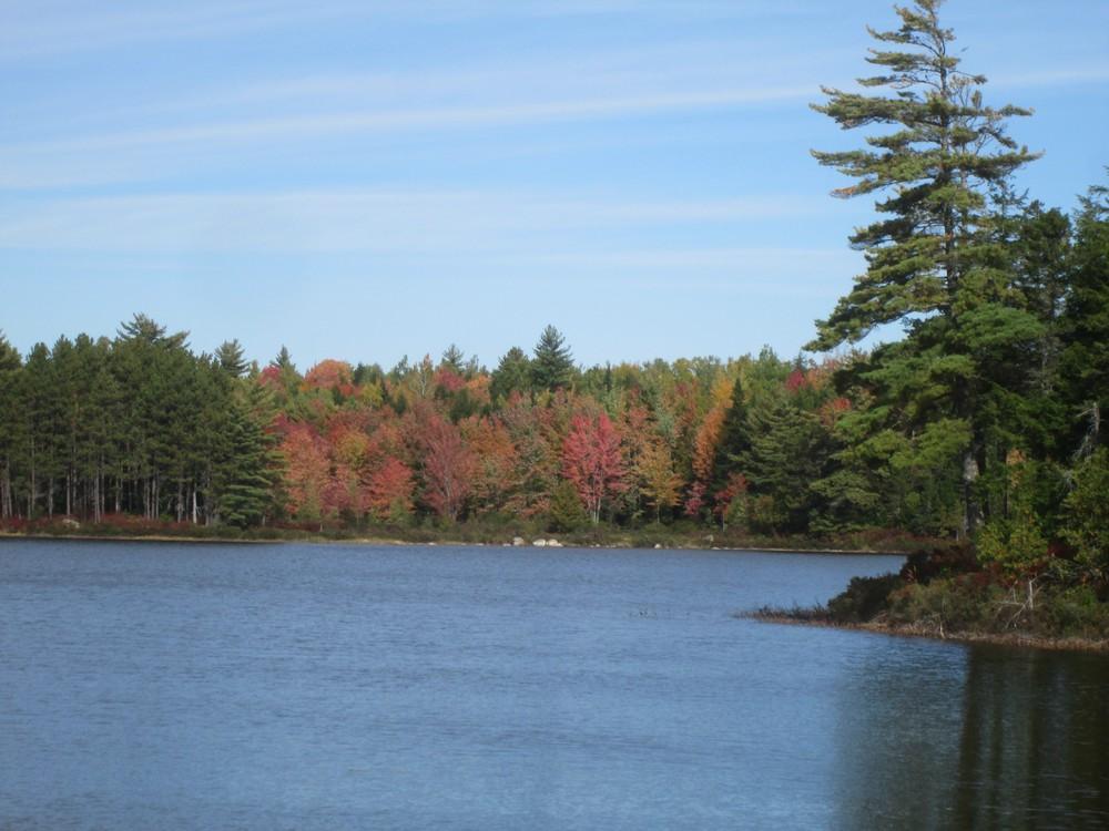 North end of Wabassus Lake, Fall colors (Credit: Roger Brown)