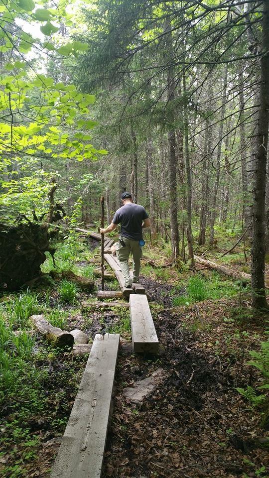 Log walkway sample (Credit: jralbert21)