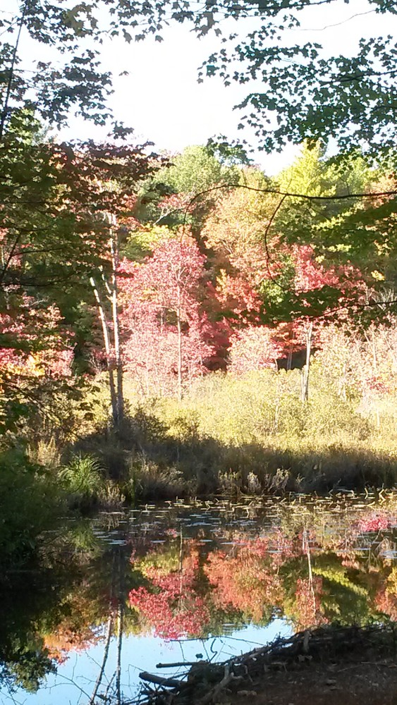 Wetland in fall (Credit: Midcoast Conservancy)