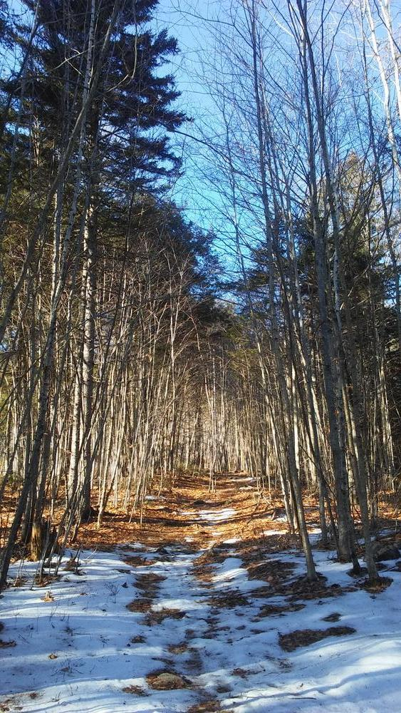 North cliff trail (Credit: 12/11/2019 Earlene Sprague)