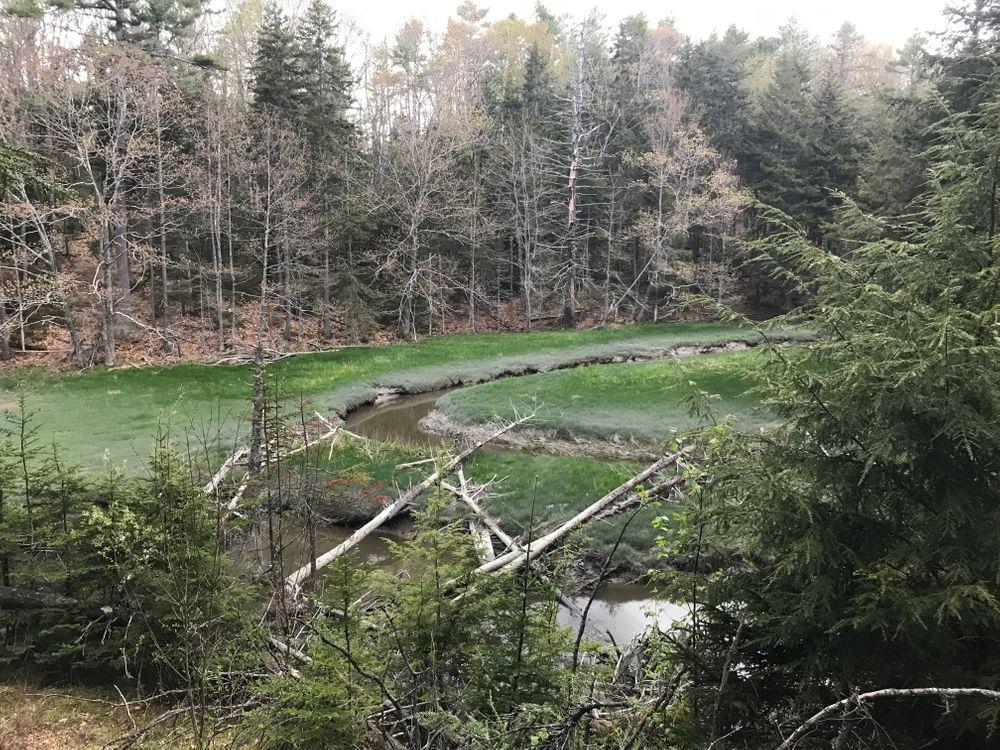 The Farm Loop trail