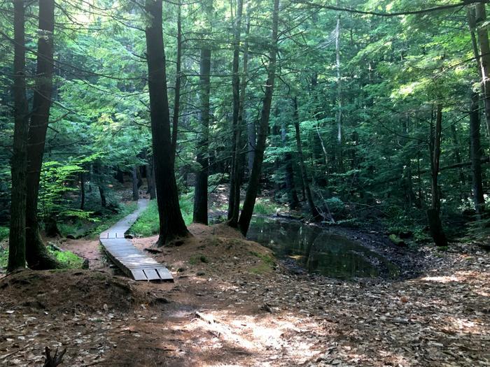 Trail near Rummels Field (Credit: Nicole Grohoski)