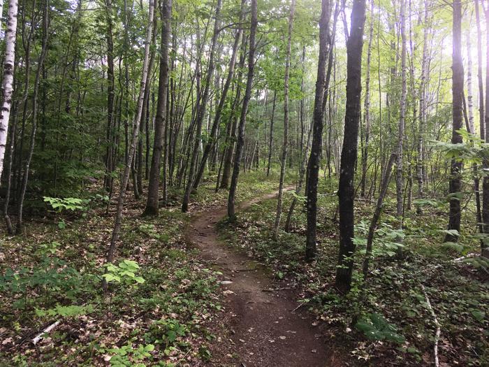 Great surface for mountain biking (Credit: Nicole Grohoski)