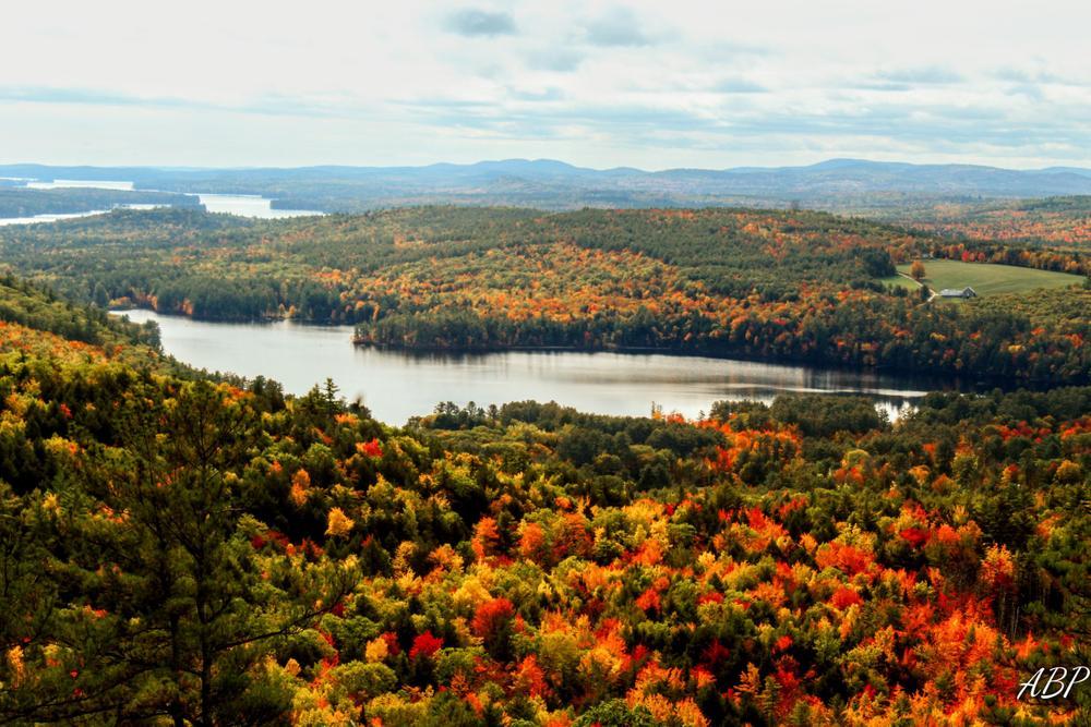 Fall foliage (Credit: Amber Philbrook)
