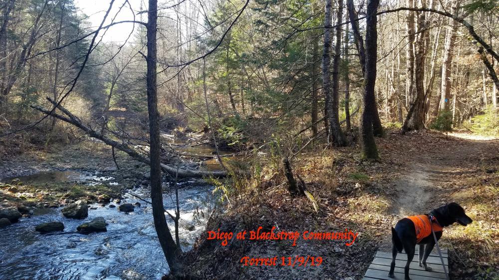 Blackstrap Community Forest