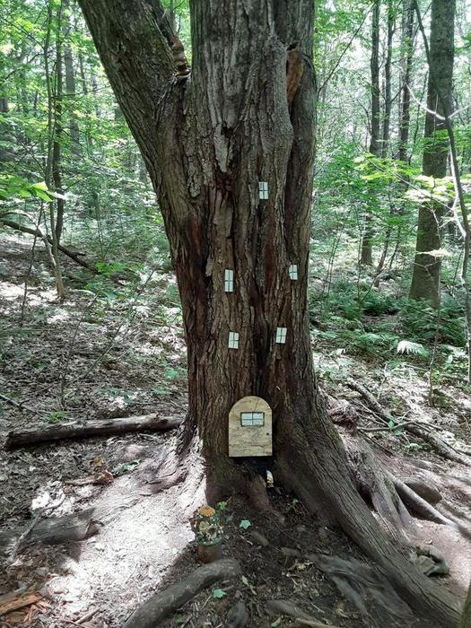 Mount Pisgah Conservation Area Trails