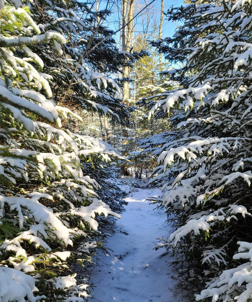 Amherst Mountains Community Forest - Ducktail and Partridge Pond Trails