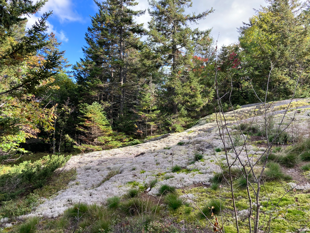 Mount Will Trail