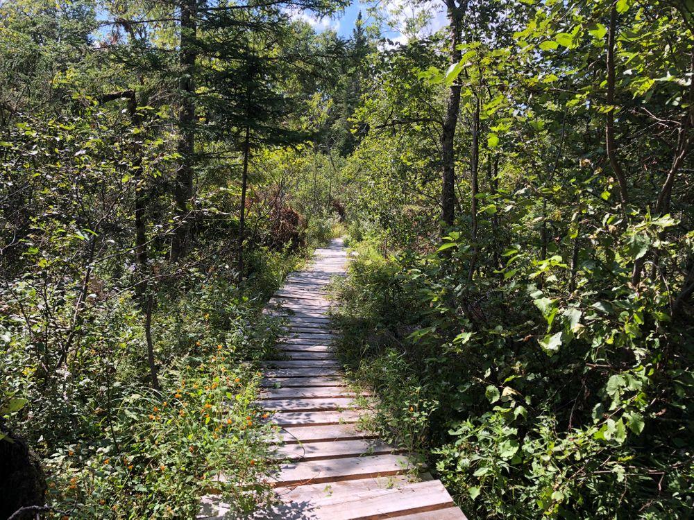 Hatchery Brook Preserve trail