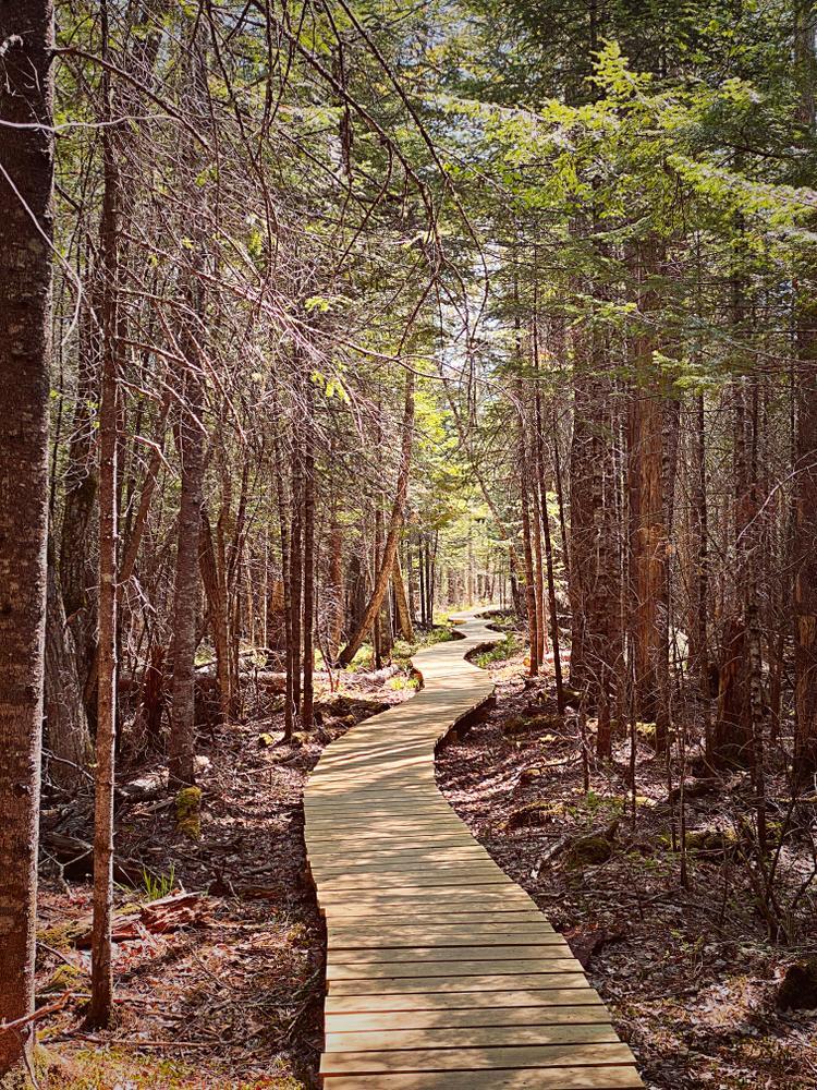 Half Witt Trail (Credit: jennacs4)