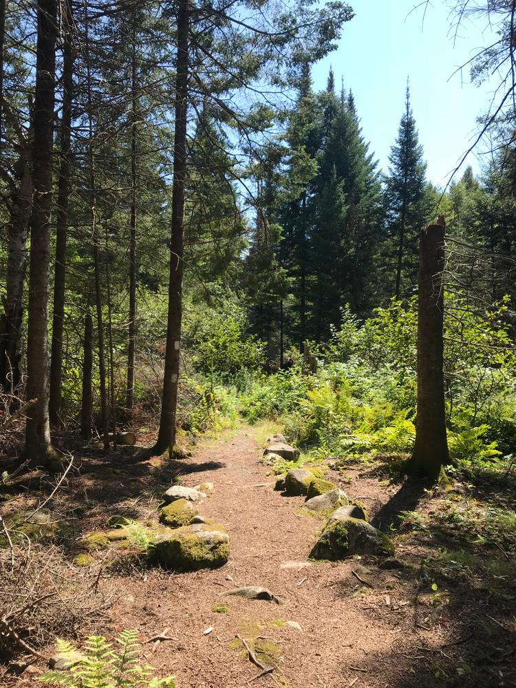 Trail surface (Credit: RLHT)