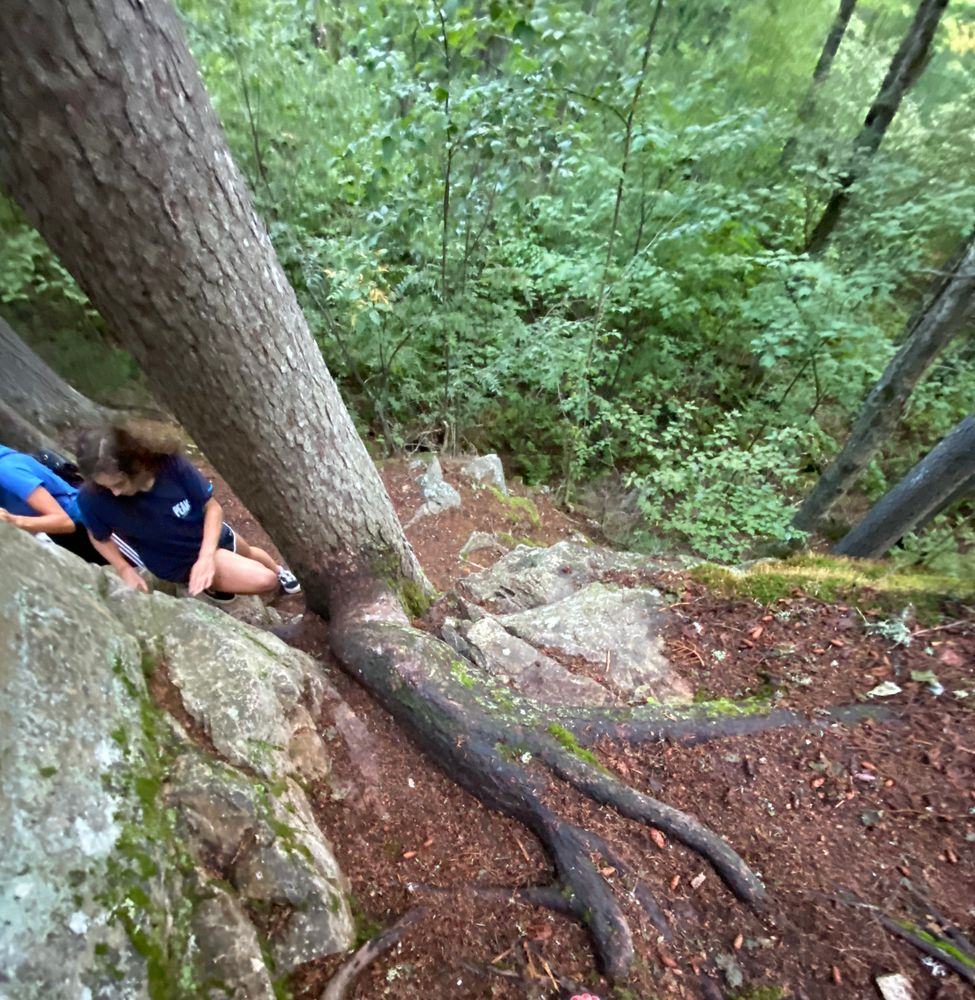 Climb up and then back down along the ridge of rock wall and tree trunk (Credit: eigram1970)