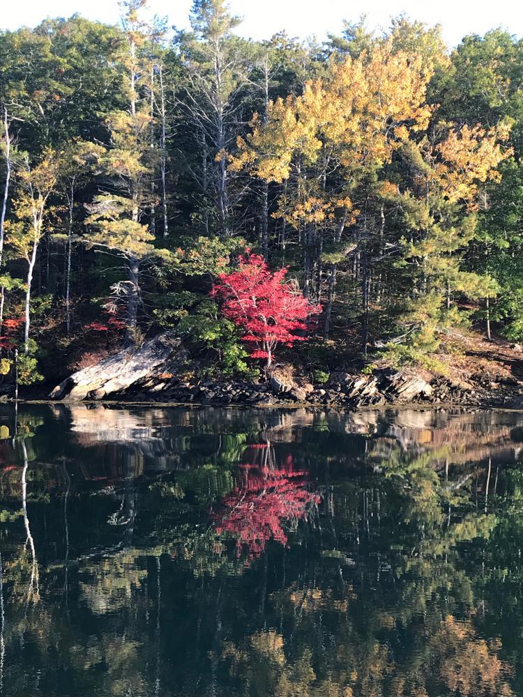 Autumn glory (Credit: Isaiah)