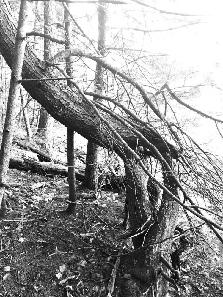 Twisted tree (Credit: Isaiah)