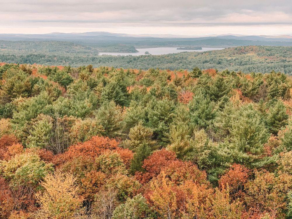 Fall Foliage (Credit: Kelsey Mills)