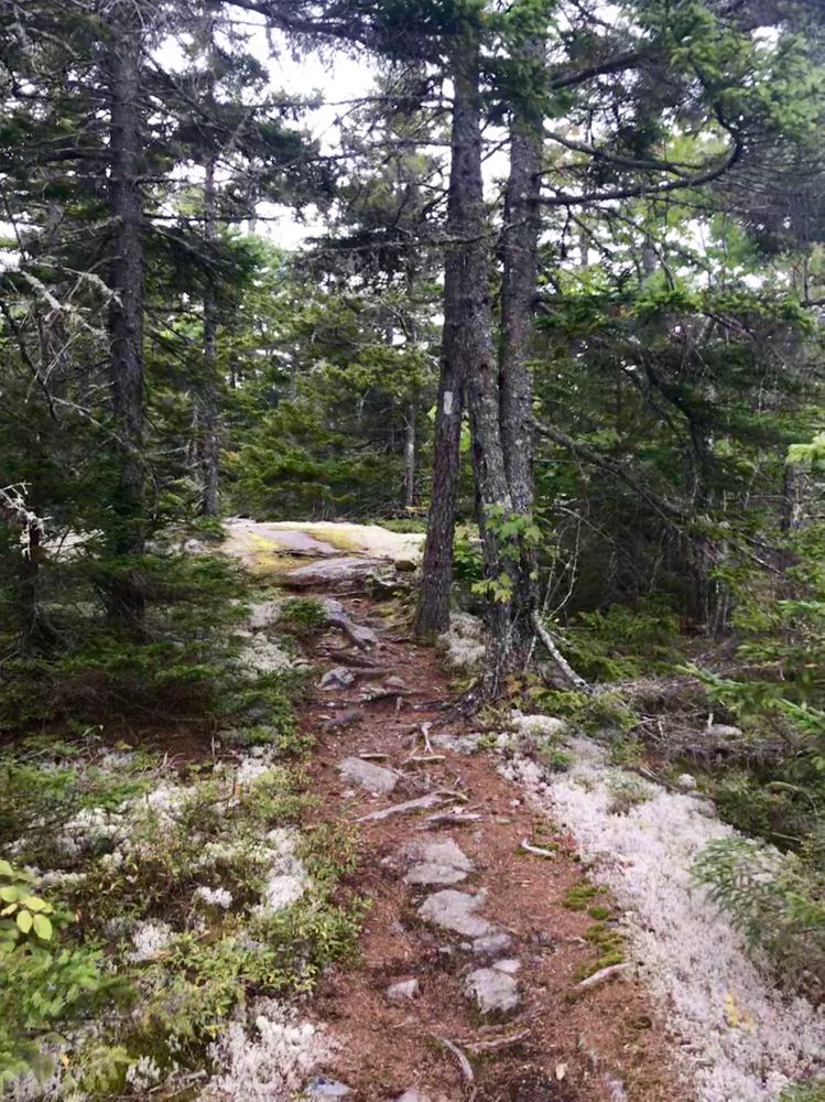 On the trail (Credit: Theresa York)