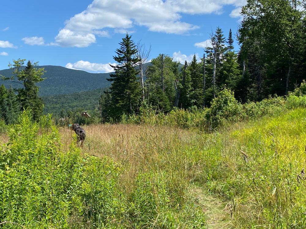 Rock Pond Trail