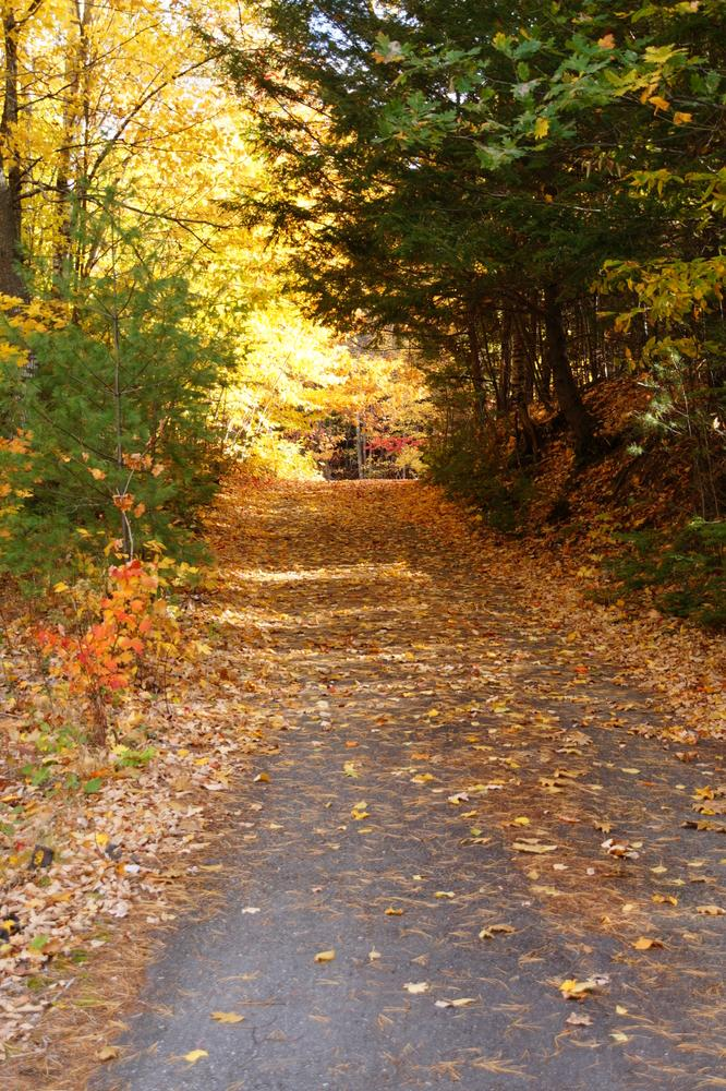 Start of Trail - Fall (Credit: Jeanette Matlock)