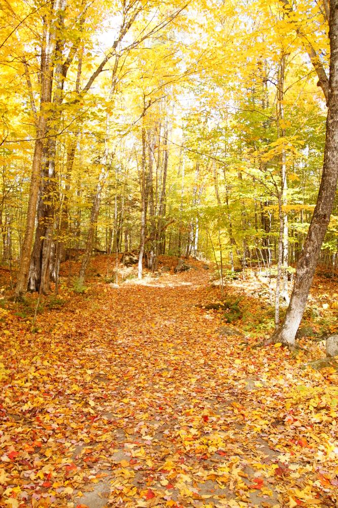 Golden Fall Foliage along the trail (Credit: Jeanette Matlock)