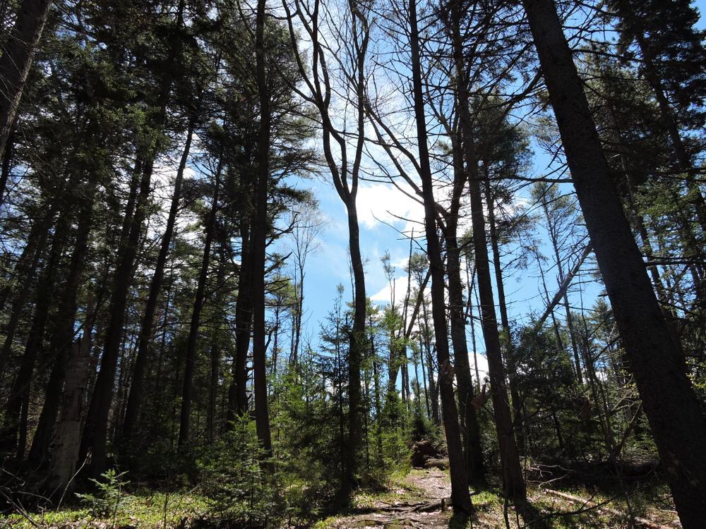 Gorgeous trails (Credit: Kim Hansen)