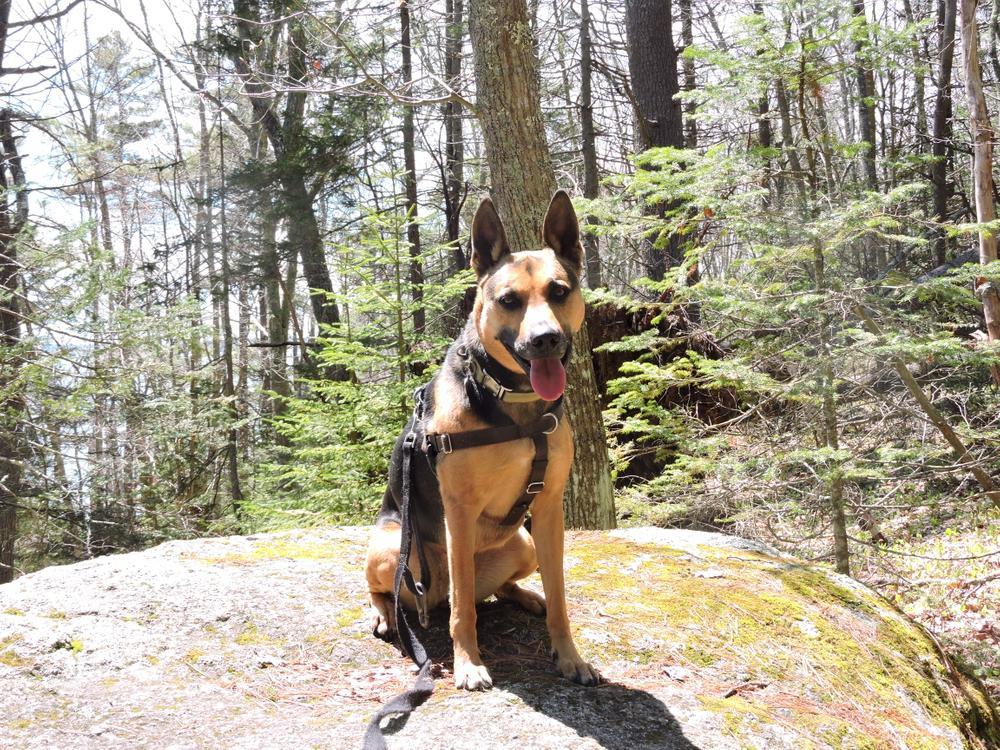 Very dog friendly. (Credit: Kim Hansen (Annika))
