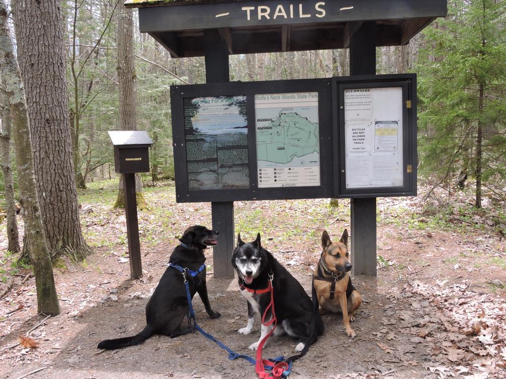 Three mutts enjoying the trails (Credit: Kim Hansen (Jack, Afrienda and Annika))