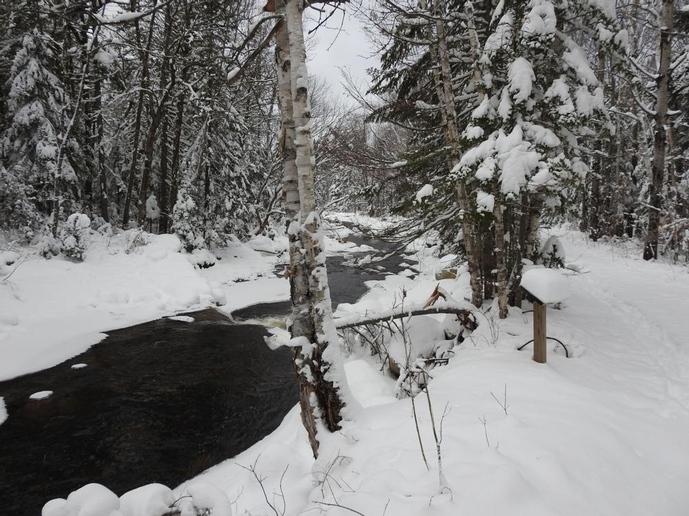 South Bog Stream - Fresh moose tracks in the snow (Credit: RBerry)
