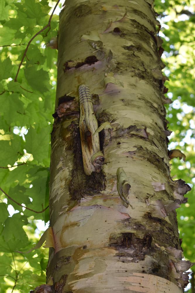 telephone wire insulator- Big Moose Mt trail (Credit: Sheila Ford sheilafordphotography.com)