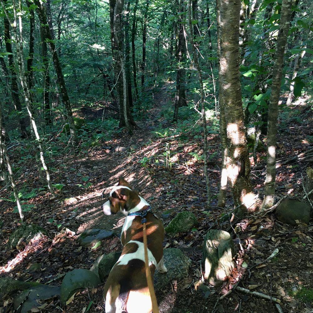Halfmile Pond Trail (start) (Credit: S.Curry)