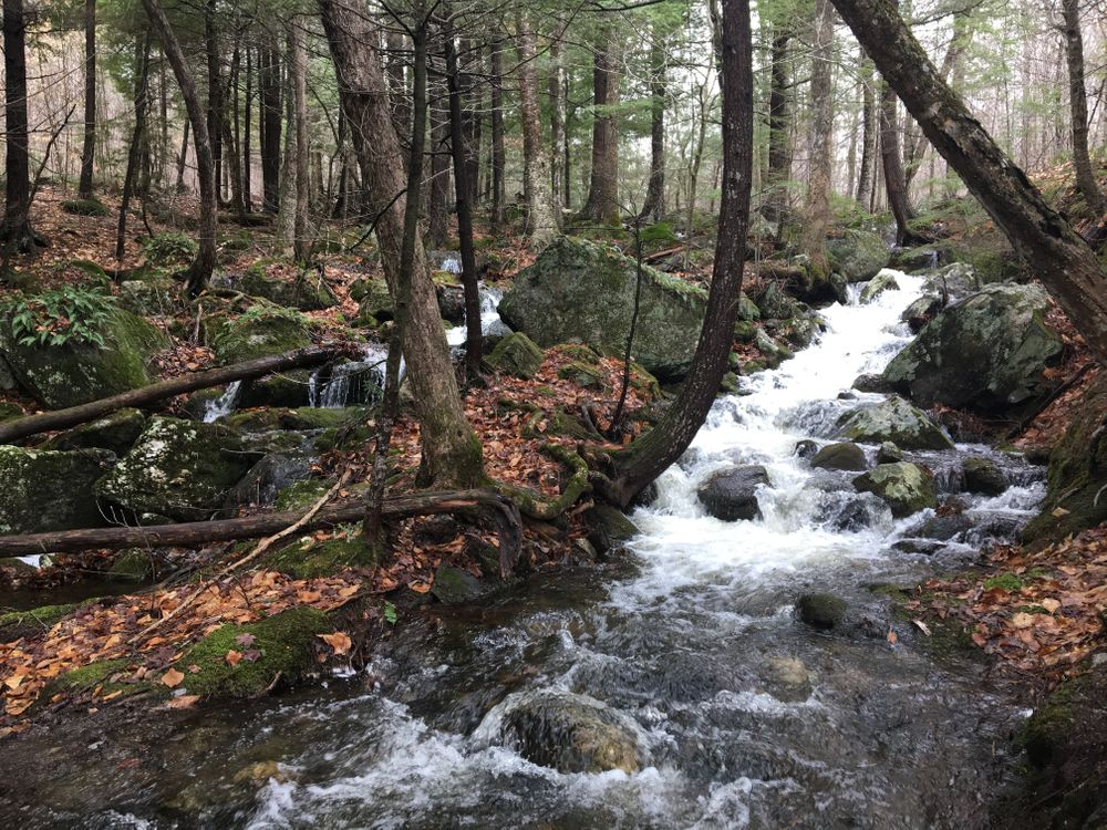 Cascade Trail - After Spring Rain 2 (Credit: Ben Poulin)