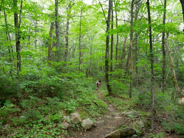 Horns Pond Trail in August (Credit: Bigeloafah)