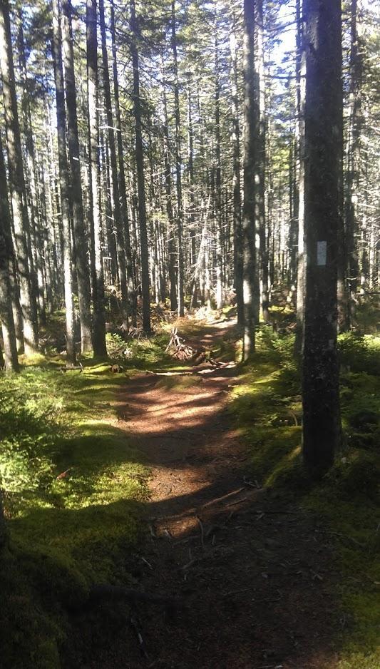 Lowland Spruce-Fir Forest