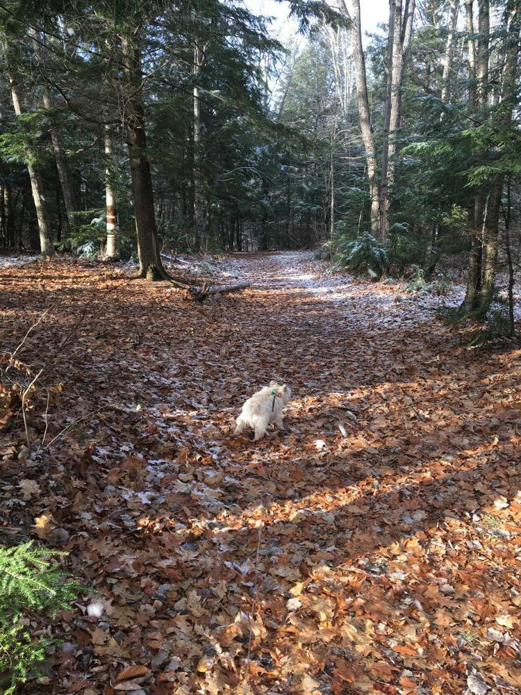 Duffy the Cairn Terrior Headed up the Weston Waters Trail (Credit: Nancy Williams)