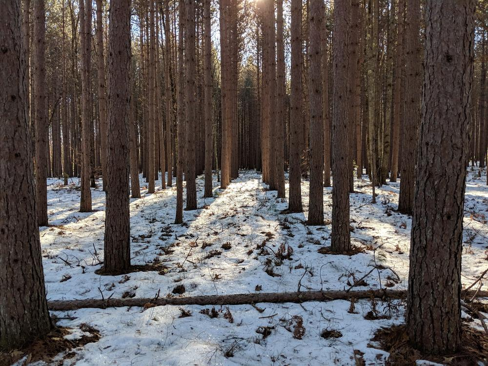 near the beginning of trail, 12/9/18 (Credit: Michael Hanson)