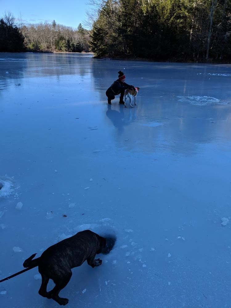 out on frozen Alewife Pond, 12/9/19 (Credit: Michael Hanson)