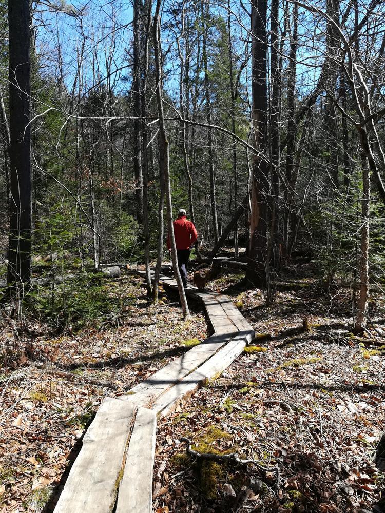 Whittier Woods board walk - 21 March 2020 (Credit: Christine Parker)