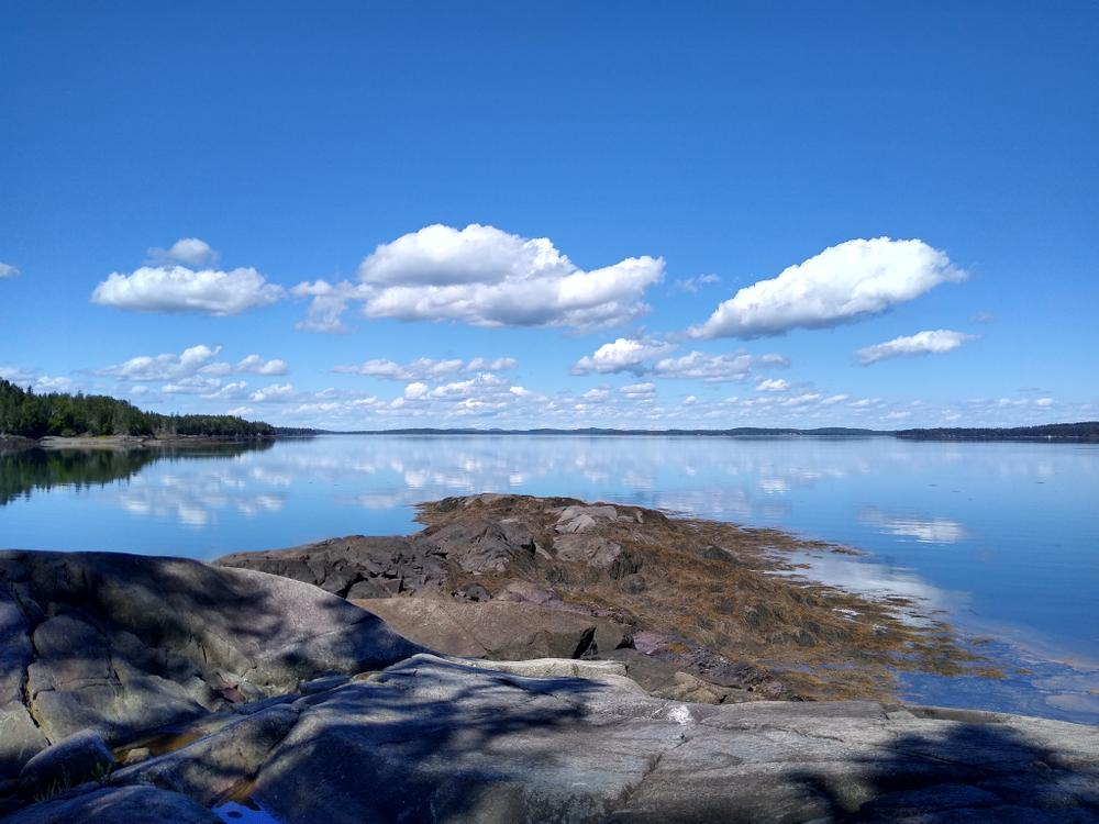 Cobscook Bay from Land's End. (Credit: Scott Bennett)