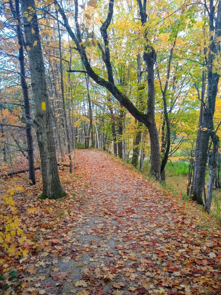 Foliage on East Loop (Credit: Nikki Viden)