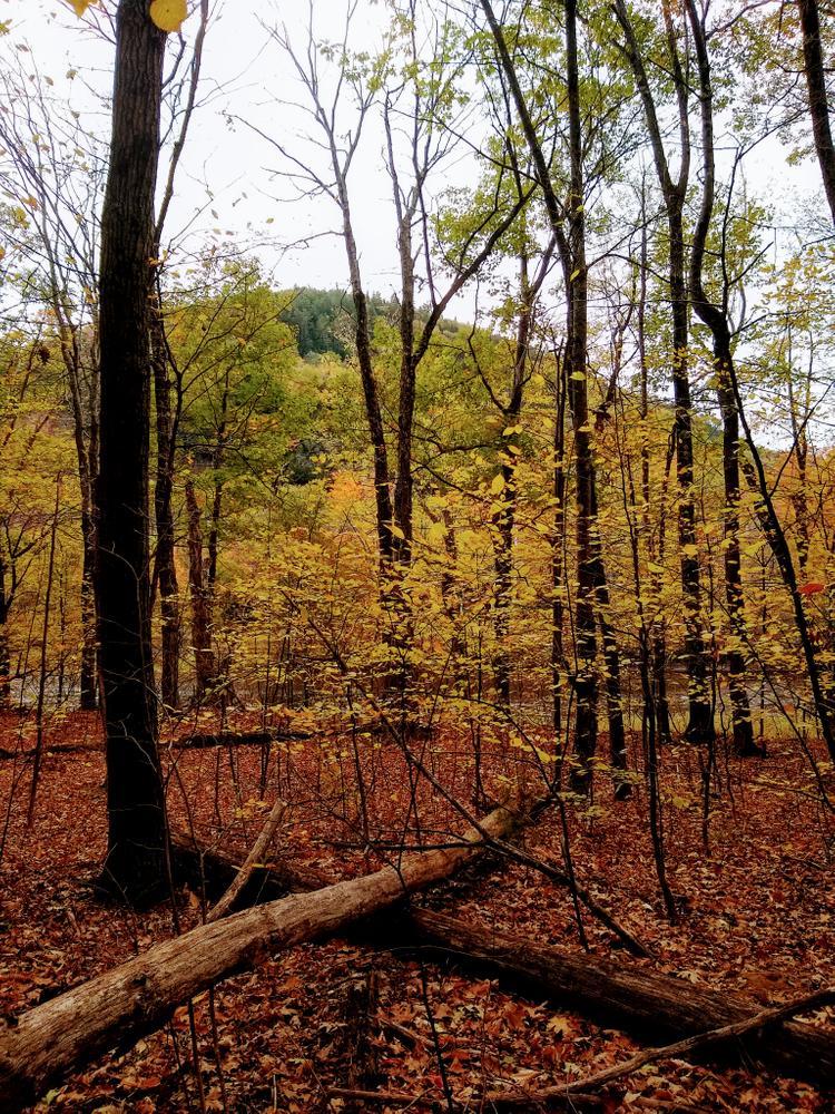Esker trail (Credit: NikkiV)