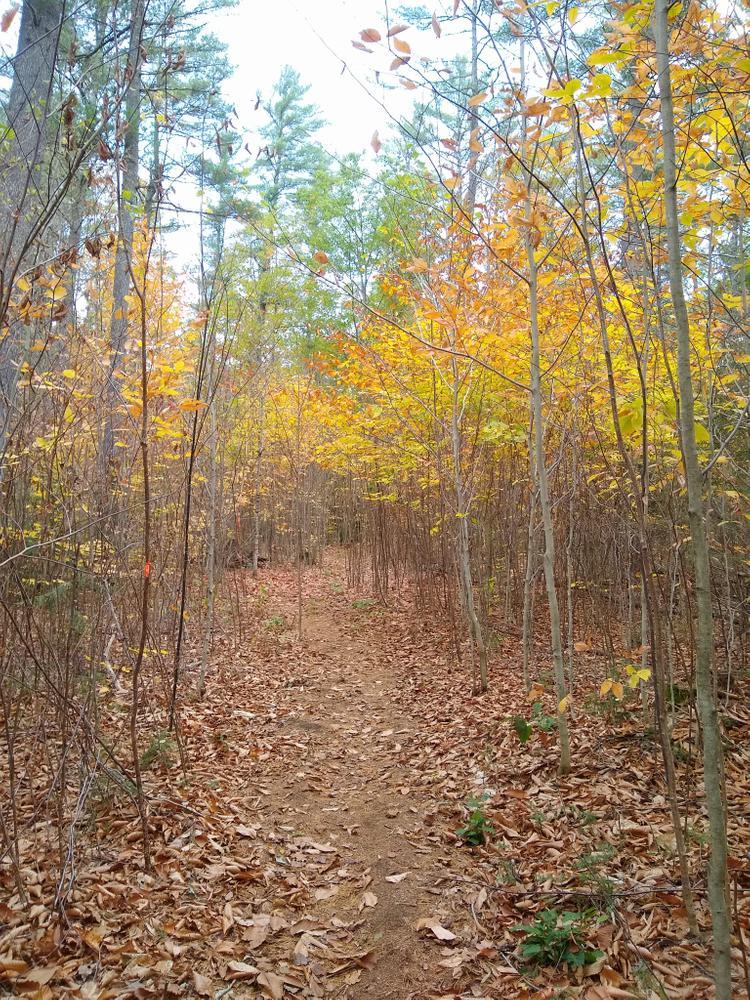 Chapman Brook trail (Credit: NikkiV)