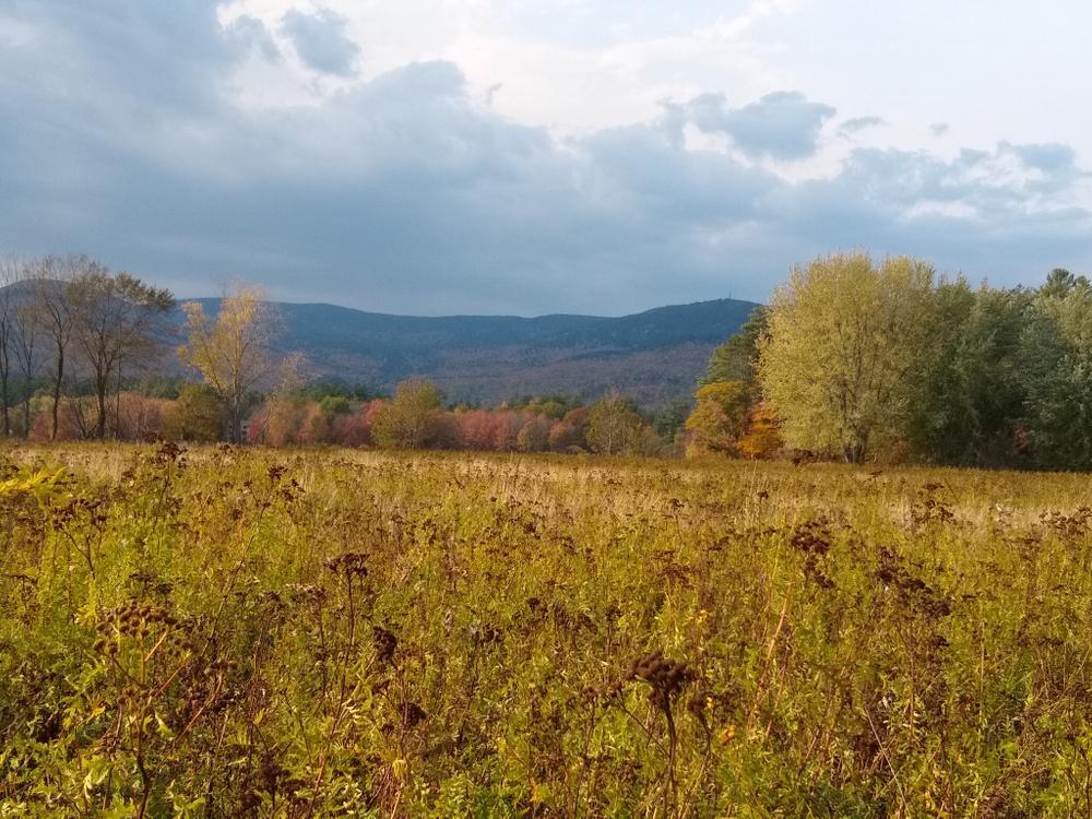 Field trail to river (Credit: Nikki Viden)