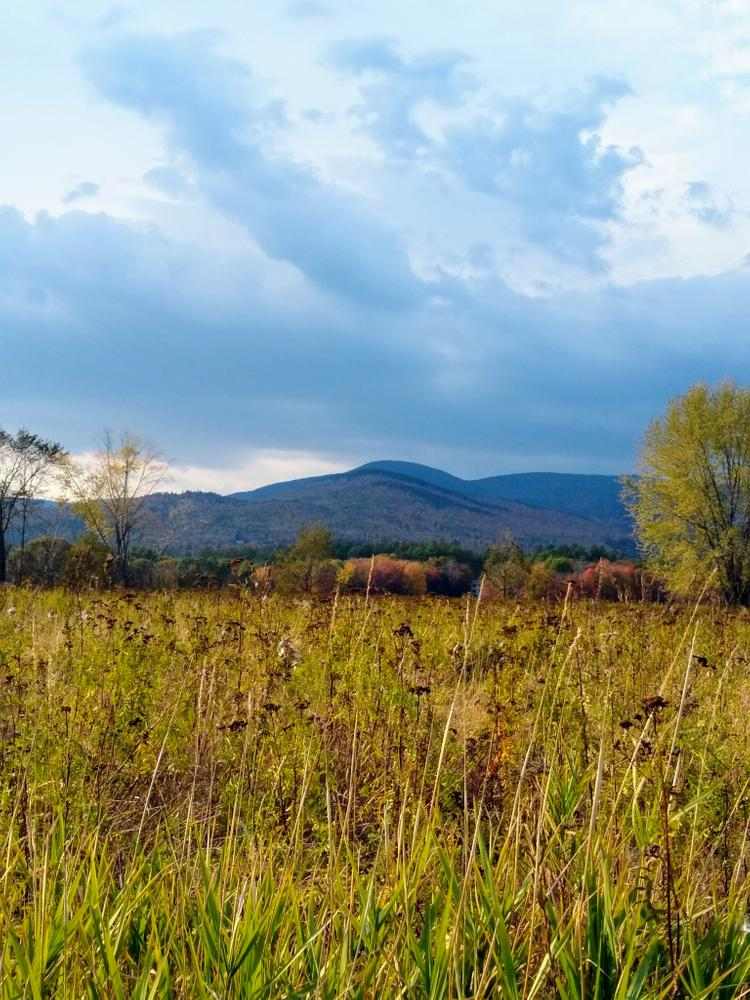 View of mountains down in the field (Credit: NikkiV)