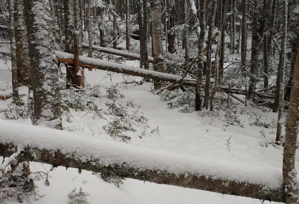 Blow down on Outlook Trail 12/31/20 (Credit: MtnGotDad)