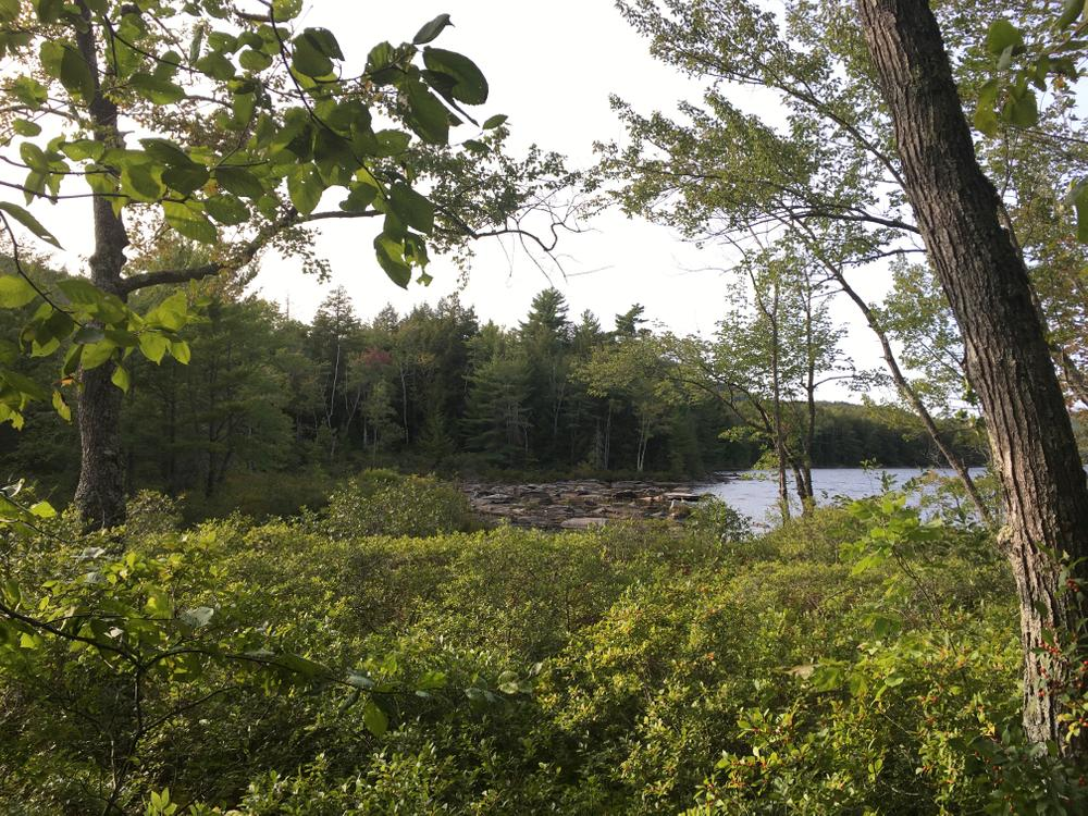 View of Watson Pond (Credit: Isabelle Rogers)