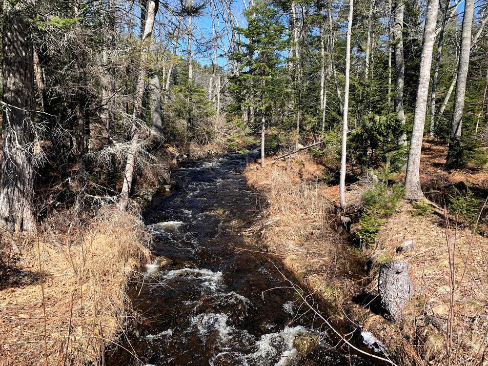 Spring stream (Credit: Paula Bourque)